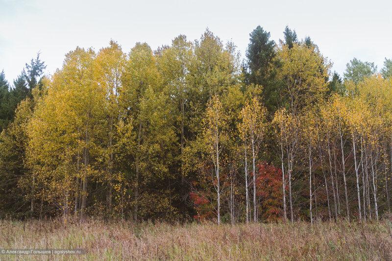 Осенний лес