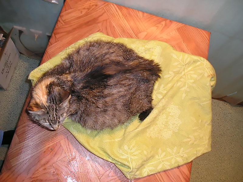 Фотопост для противников стерилизации кошек.: ru_cats