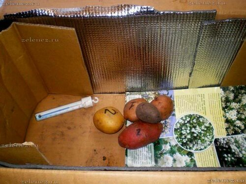 Семенной картофель храню на крыше