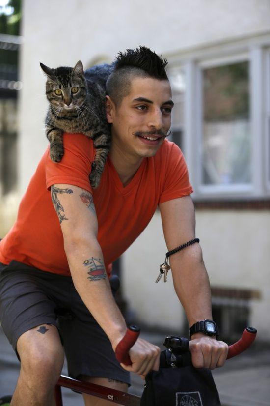 Кот на плече фото 5