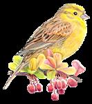 http://img-fotki.yandex.ru/get/9264/97761520.1d/0_7d61a_b5f9e_orig.png