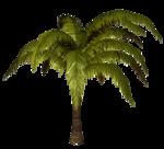 R11 - Palms - 2013 - 010.png
