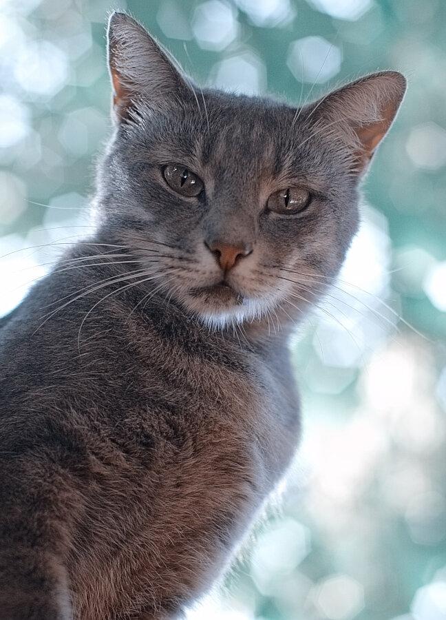 Инопланетный кот