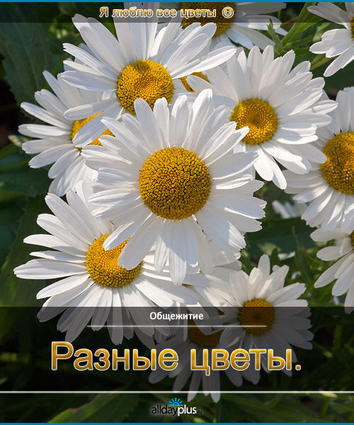 Я люблю все цветы, часть 52.