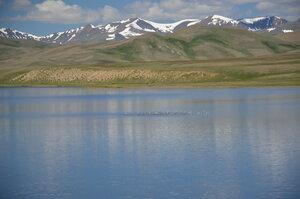 Стая уток на озере Ак-Куль