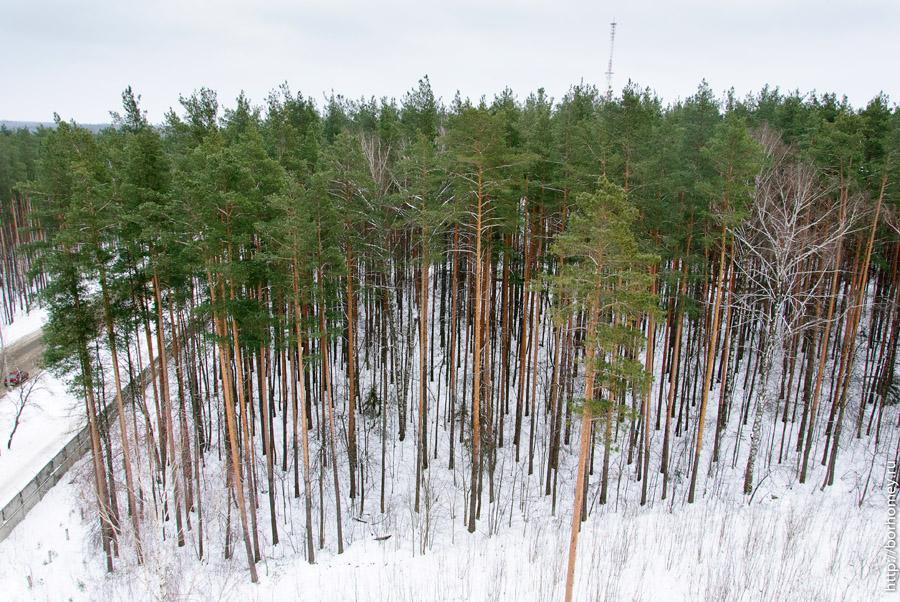 саровский лес