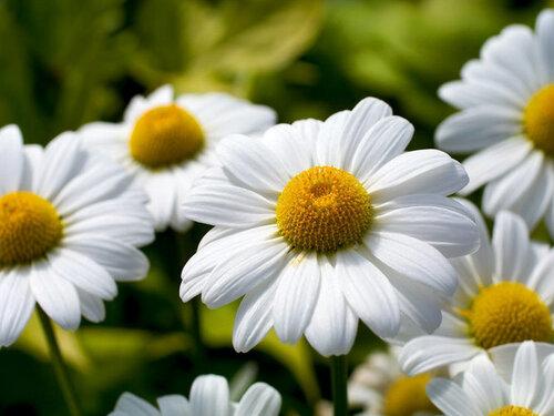 Характер женщины по любимому цветку