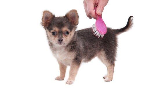 Уход за шерстью щенка