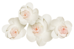 roses forus_element(38).png
