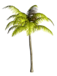 Palms  (36).png