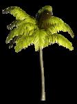 Palms  (36).png