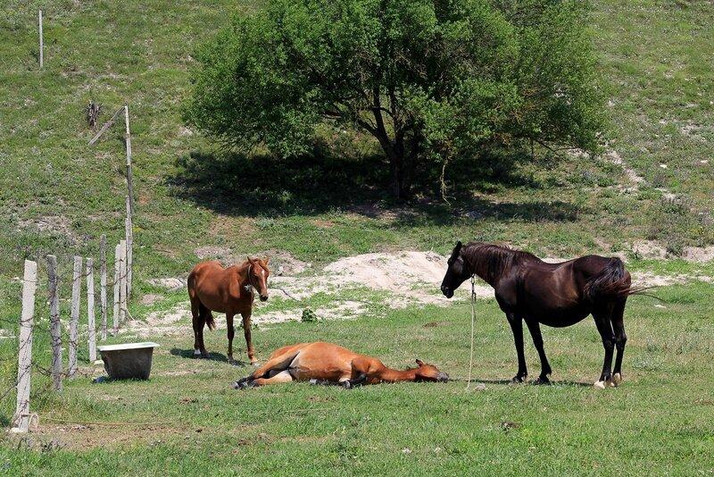 Лошади, кони и жеребята в пещерном городе Эски-Кермен, Крым IMG_5740.JPG