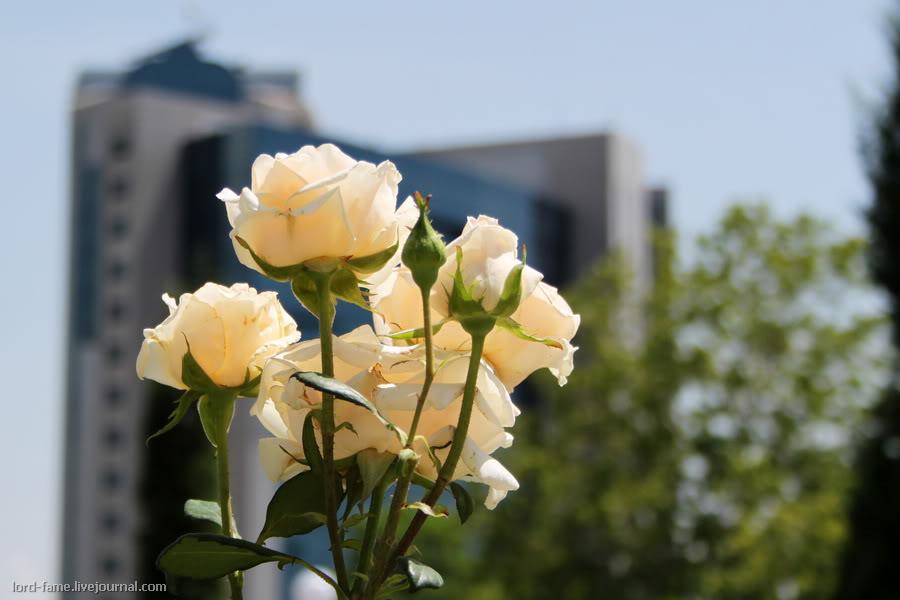 Tashkent_May6.JPG