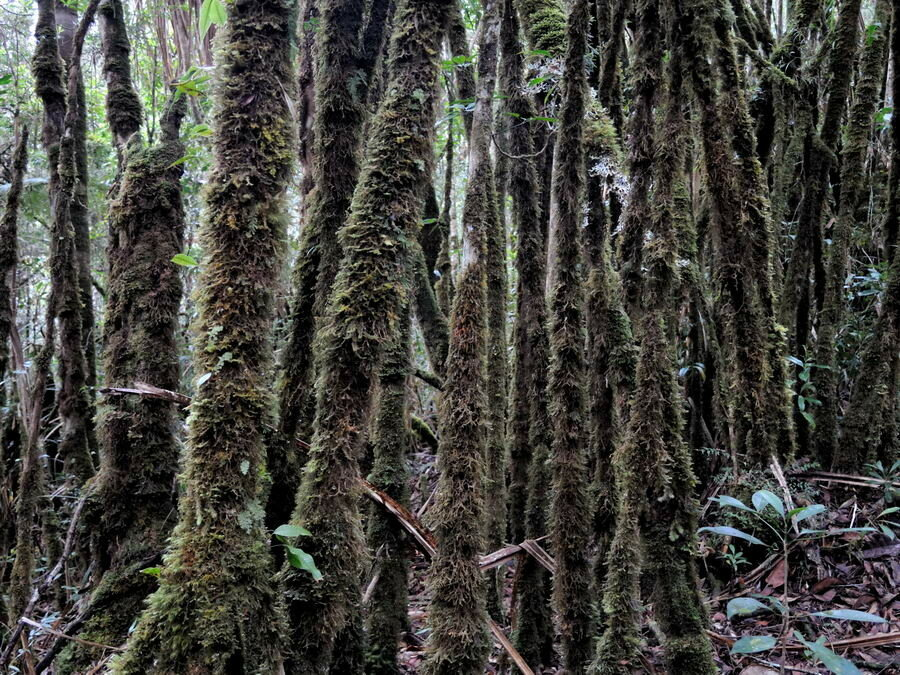 Растительность на перевале
