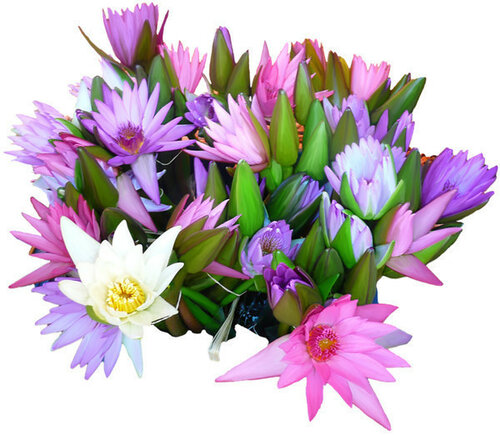 http://img-fotki.yandex.ru/get/9265/41473513.259f/0_14480c_fd0ca31_L.jpg