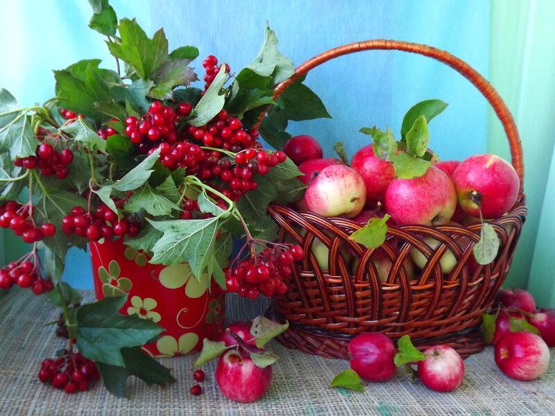 Калина вызрела, и яблочки созрели...