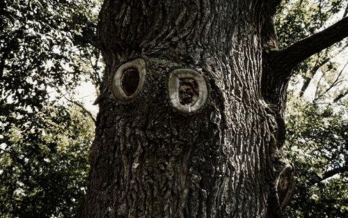 Глаза леса
