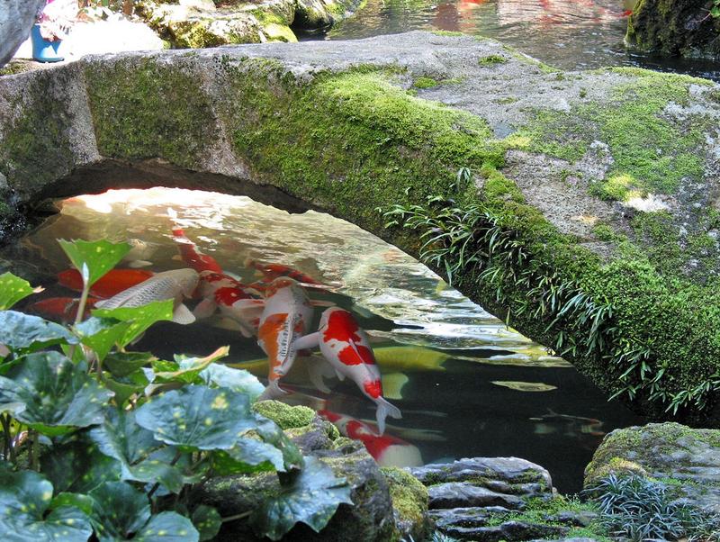 Япония страна сочетающая традиции и