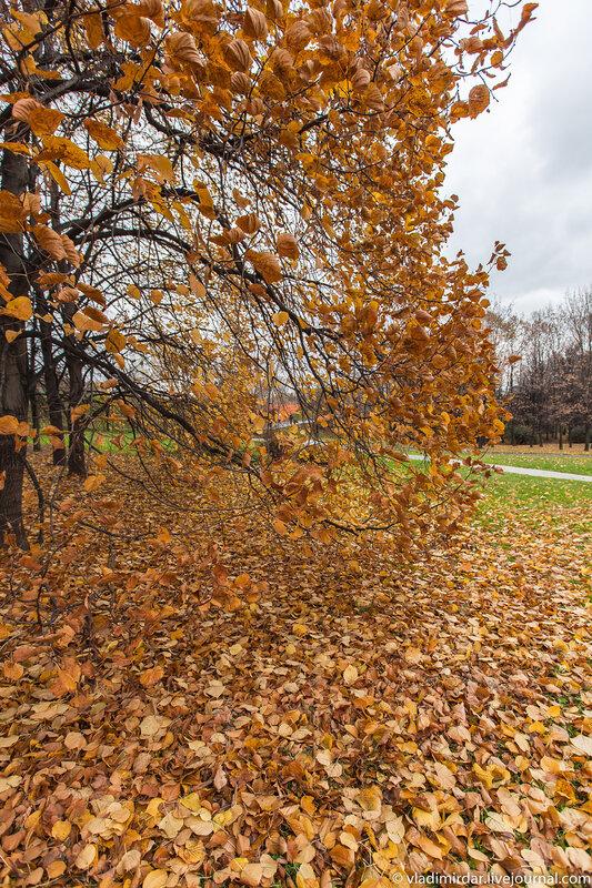 Золотая Осень - Коломенское - объектив Sony SEL-1018 10-18 mm F/4 OSS