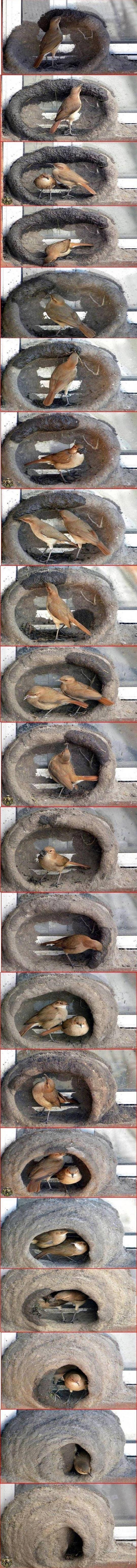 Как птицы строят гнезда
