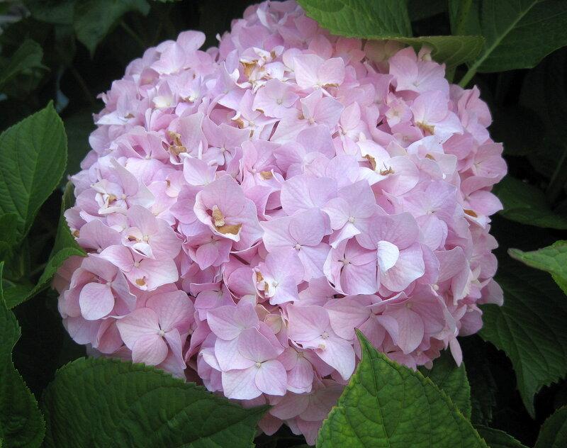 цветы в Будве
