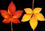 Осень119