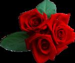Holliewood_RoseIsARose_Rose23.png