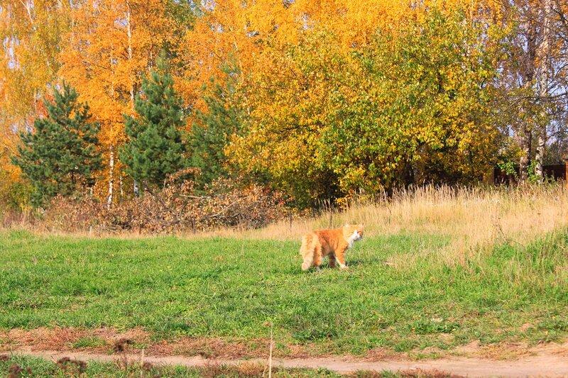 Осень ...коты  порыжели