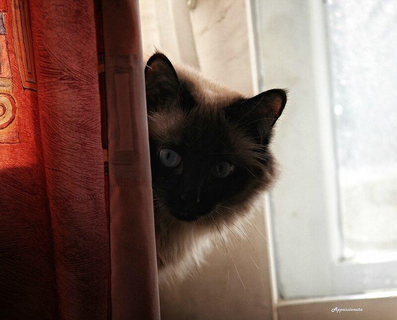 Кошковое любопытное