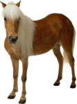 horse_2014 (2).png