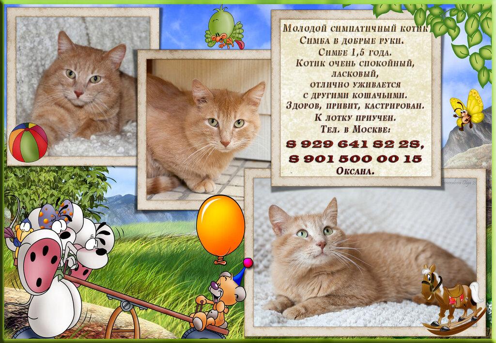 Москва. Молодой симпатичный котик Симба в добрые руки.