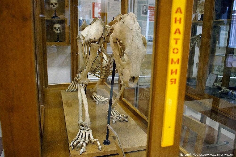 Лето. МГМУ. Музей анатомии. 27.08.15.19..jpg