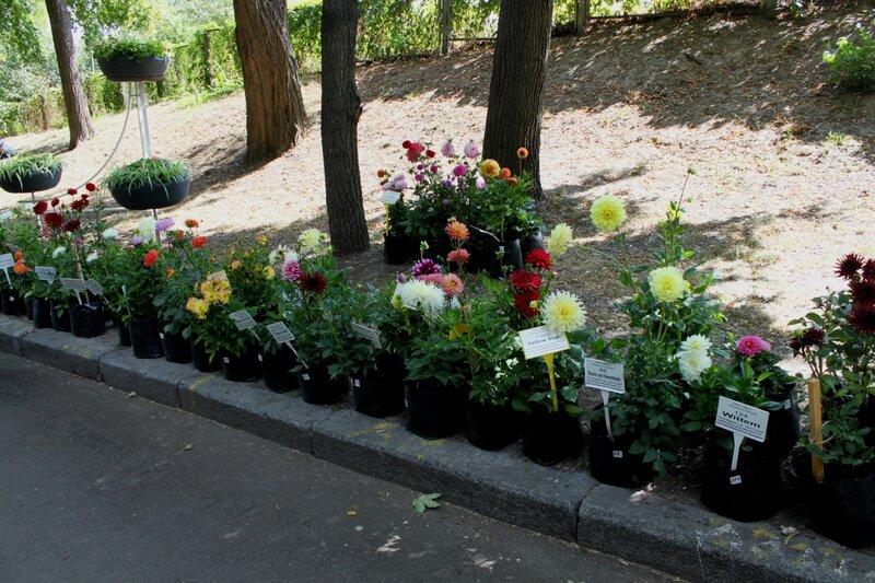 Коллекция сортовых цветов
