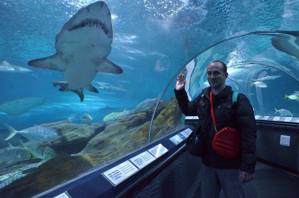 Фотоохота на акулу в океанариуме городе Шанхай на зеркалку Nikon D5100 KIT 18-55mm f/3.5-5.6G.