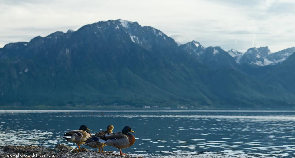 Фотография 10. Альпы в швейцарском курорте Монтрё. Слишком плотно обрезанный берег - повод для удара штативом по спине... :)