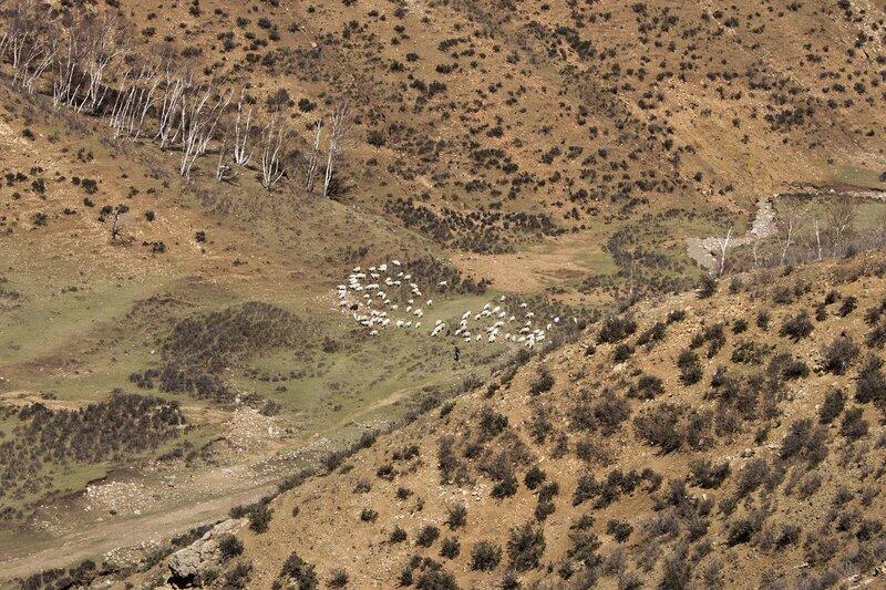 стадо овец в горах инь шань, внутренняя монголия, китай