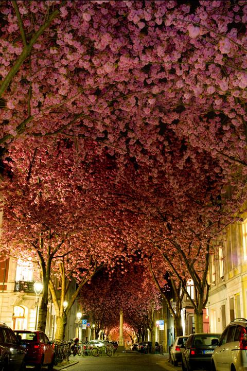 Цветущий тоннель в Германии