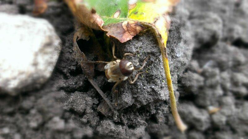 Бескрылая пчела