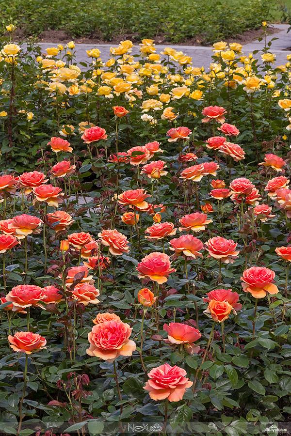 Остров Цветов Майнау, Бодензее, Германия.