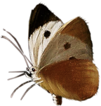ldavi-paintersfaeries-moth2.png