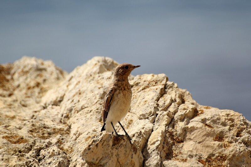 Лисёнок в камнях на Черноморском побережье Крыма IMG_5516.JPG