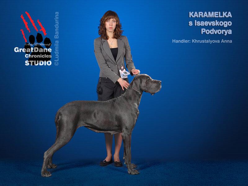 №18 KARAMELKA S ISAEVSKOGO PODVORYA (сука, класс чемпионов НКП)