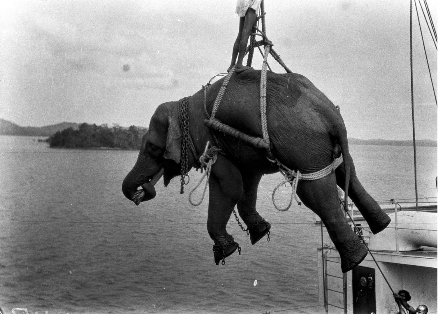1115. Погрузка слонов