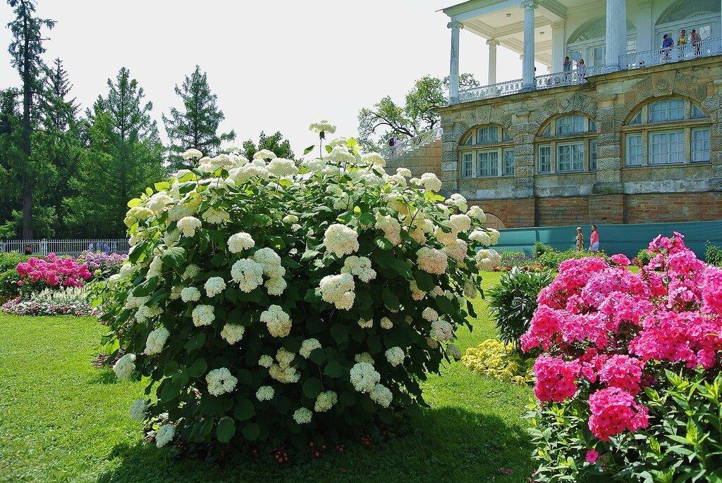 ...цветы июля