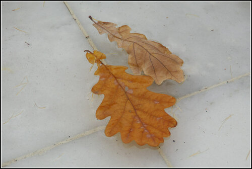 Летний сад. Октябрь 2013.