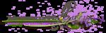 RR_LavenderFields_WA (3).png