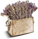 RR_LavenderFields_Element (9).png