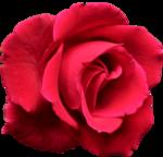 RR_MemoriesOfMom_RoseGarden_Element (35).png