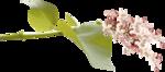 Lilas_La-vie-en-rose_elmt (10-1).png