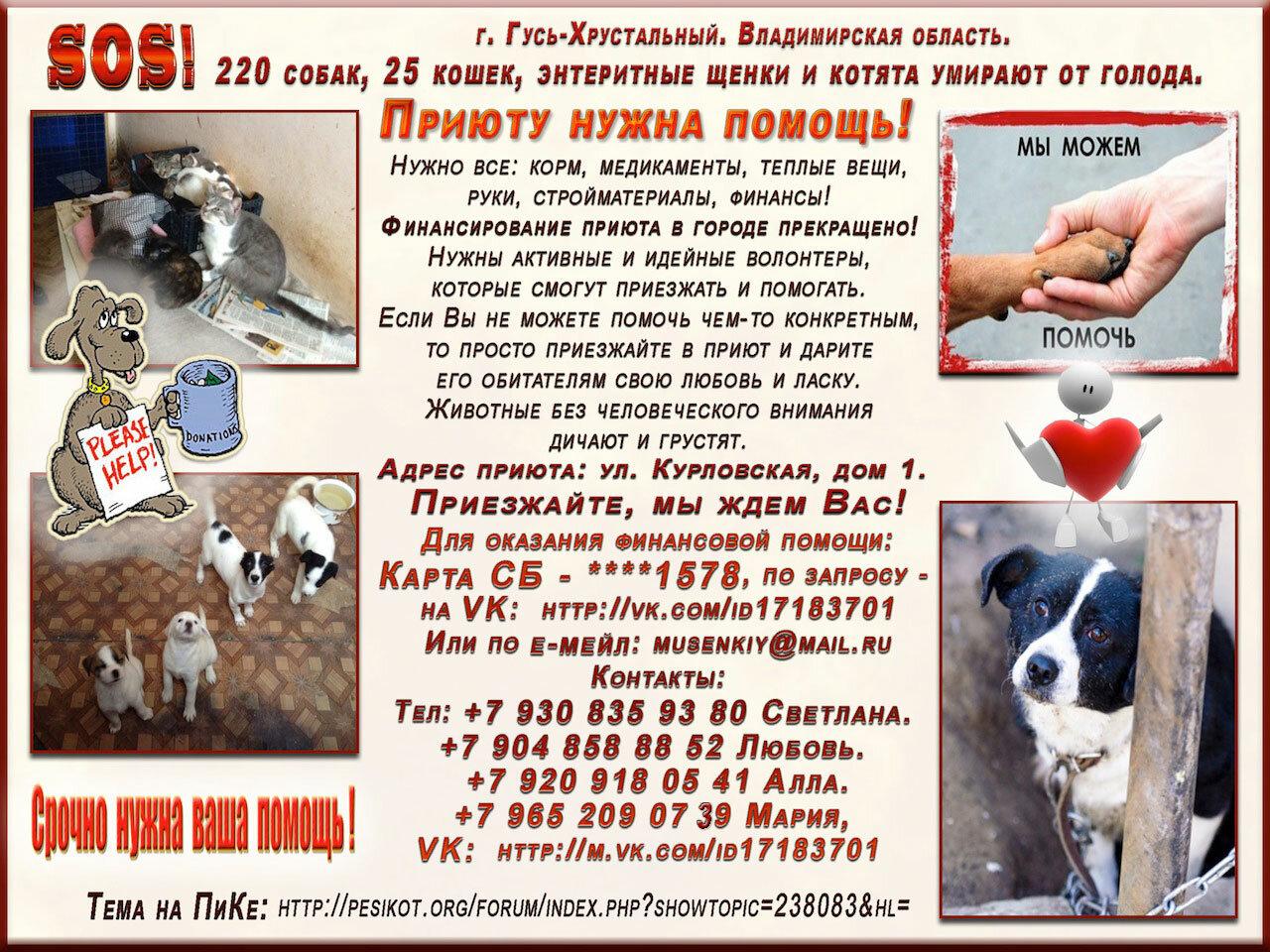 220 собак, 25 кошек, щенки и котята в приюте умирают от голода.